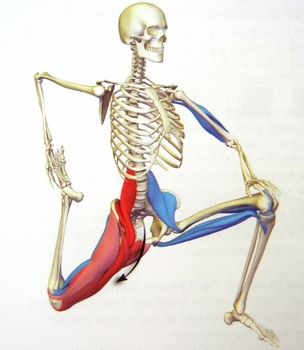 stretch_quadriceps_kneeling_skeletonMuscles_304x350